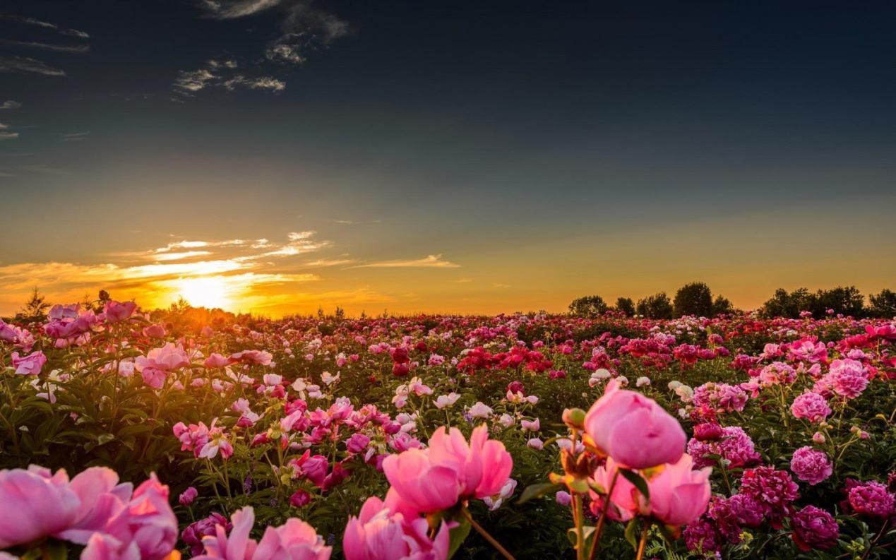 保加利亚玫瑰谷