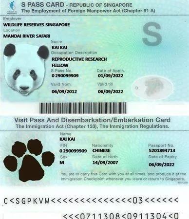 新加坡SP准证