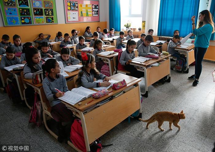 土耳其学校